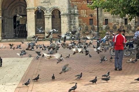 Pigeons_1