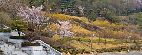 Spring flowers in Yeosu