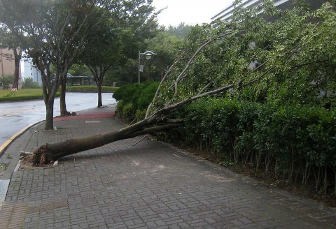 Tree knocked down at the university