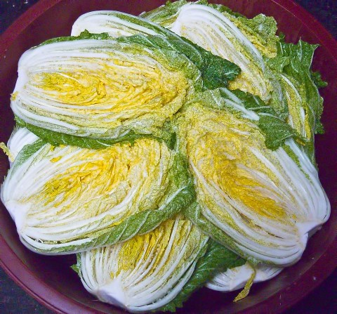 Korean Cabbage