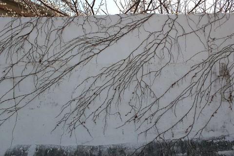 Nature's mural