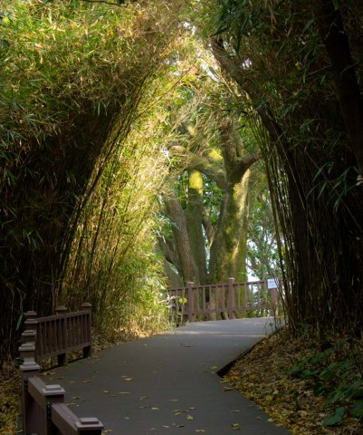 Bamboo Grove on Odongdo
