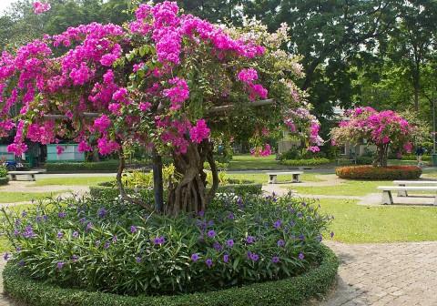 Flowers in Lumphini Park