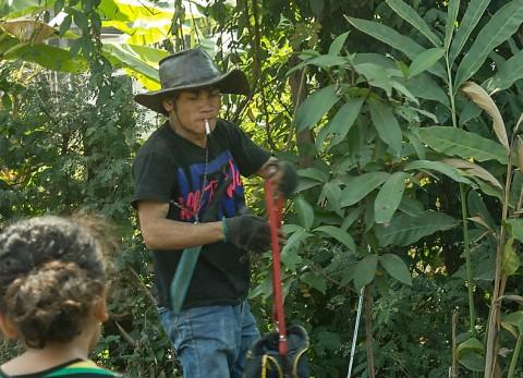 Noy, coconut tree climber
